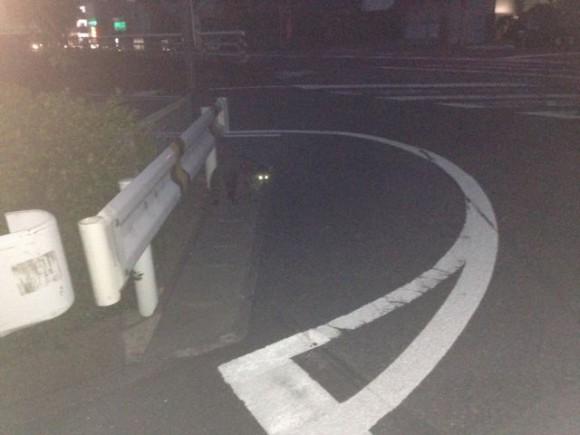 稲沢市にアライグマ出現